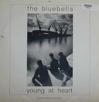 Bluebells Young At Heart 12'' 570434